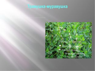 "Травушка-муравушка Вот стелется по земле ""травушка-муравушка"". Простая русска"