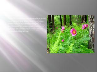 Растение это содержит очень много полезных веществ, поэтому используют в мед