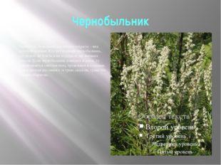 Чернобыльник Чернобыл, будыльник (Аrtemisia vulgaris) - вид крупной полыни. К
