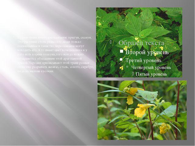 Разрыв-трава имеет два названия: прыгун, скакун. Это растение столь редко,чт...