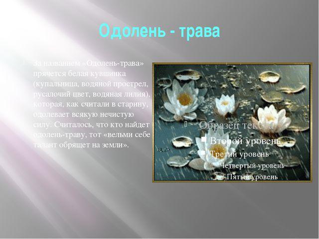 Одолень - трава За названием «Одолень-трава» прячется белая кувшинка (купальн...