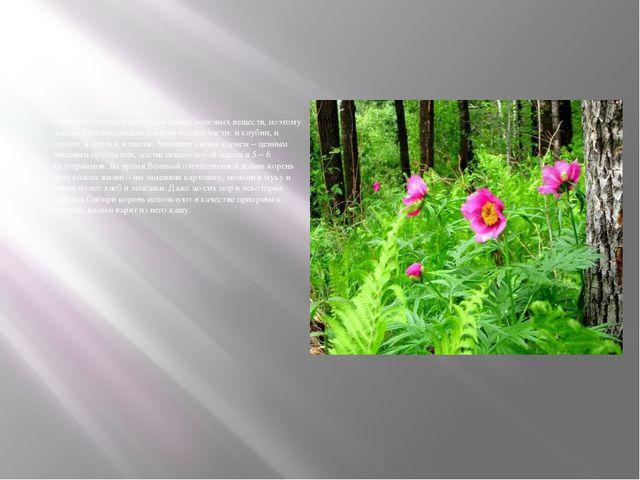 Растение это содержит очень много полезных веществ, поэтому используют в мед...