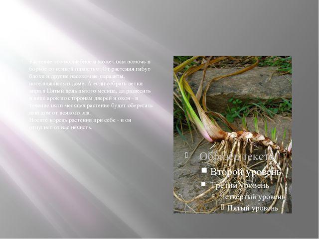 Растение это волшебное и может нам помочь в борьбе со всякой пакостью. От ра...