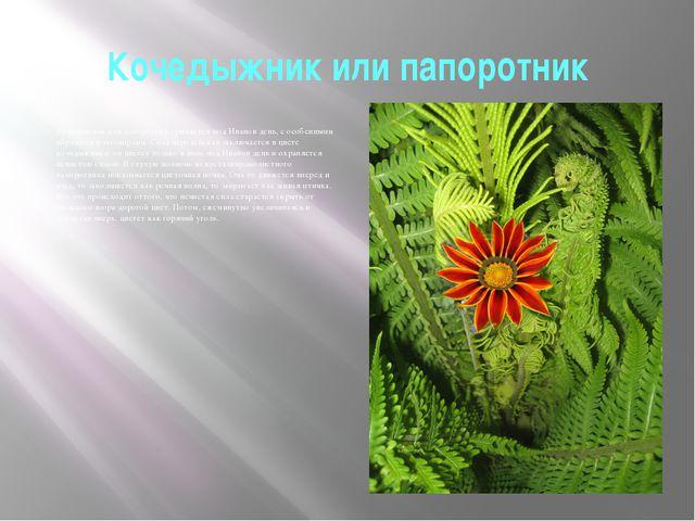 Кочедыжник или папоротник Кочедыжник или папоротник срывается под Иванов день...