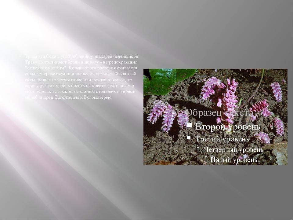Трава эта была в употреблении у знахарей-зелейщиков. Траву Петров-крест брал...