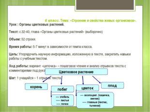 6 класс. Тема: «Строение и свойства живых организмов». Урок : Органы цветков