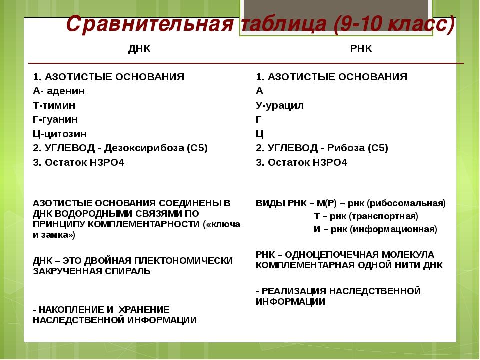 Сравнительная таблица (9-10 класс) ДНК 1. АЗОТИСТЫЕ ОСНОВАНИЯ А-аденин Т-тими...