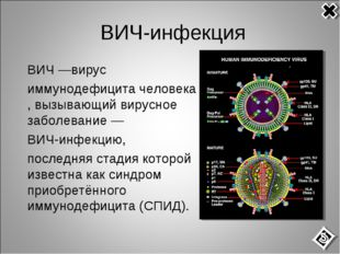 ВИЧ-инфекция ВИЧ—вирус иммунодефицитачеловека, вызывающий вирусное заболе