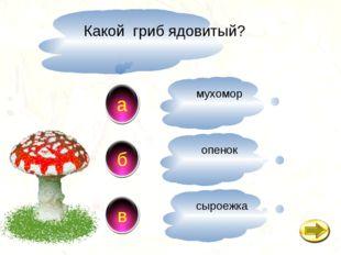 Какой гриб ядовитый? a в б мухомор опенок сыроежка