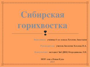 Сибирская горихвостка Выполнила: ученица 4 «а» класса Хохлова Анастасия Руков