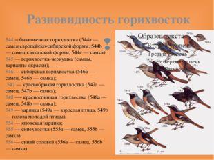Разновидность горихвосток 544 -обыкновенная горихвостка (544a — самец европей