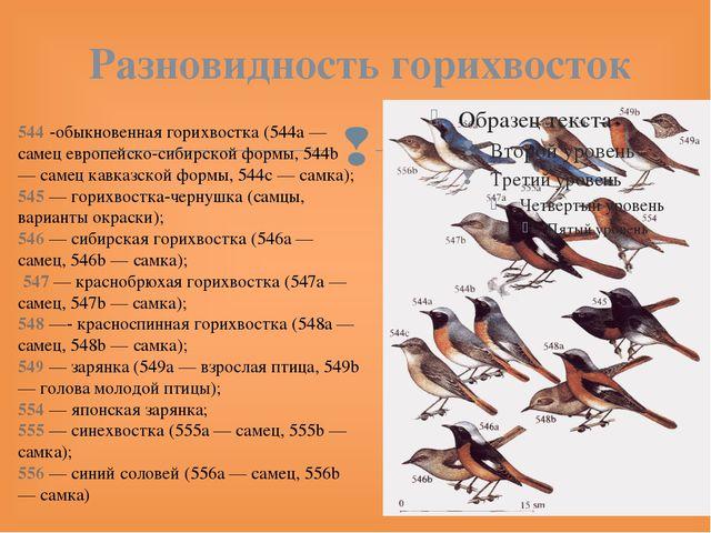 Разновидность горихвосток 544 -обыкновенная горихвостка (544a — самец европей...