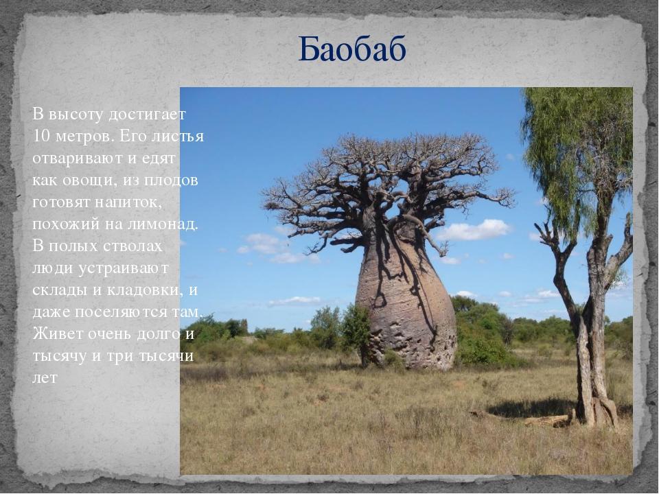 Баобаб В высоту достигает 10 метров. Его листья отваривают и едят как овощи,...