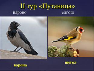 II тур «Путаница» нарово елгощ щегол ворона