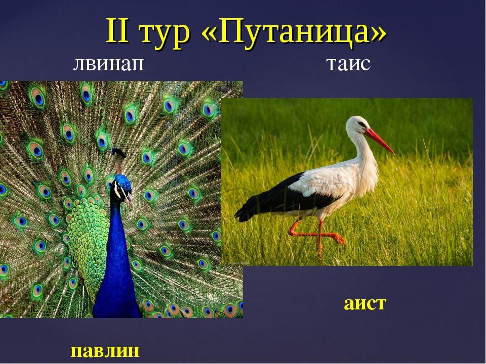 II тур «Путаница» лвинап таис аист павлин
