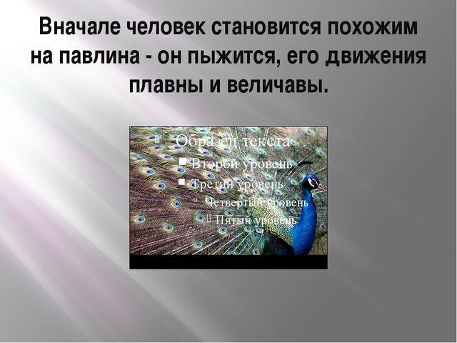 Вначале человек становится похожим на павлина - он пыжится, его движения плав...