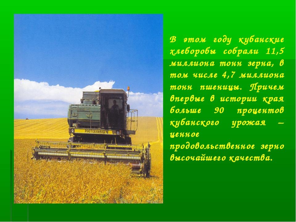 В этом году кубанские хлеборобы собрали 11,5 миллиона тонн зерна, в том числе...