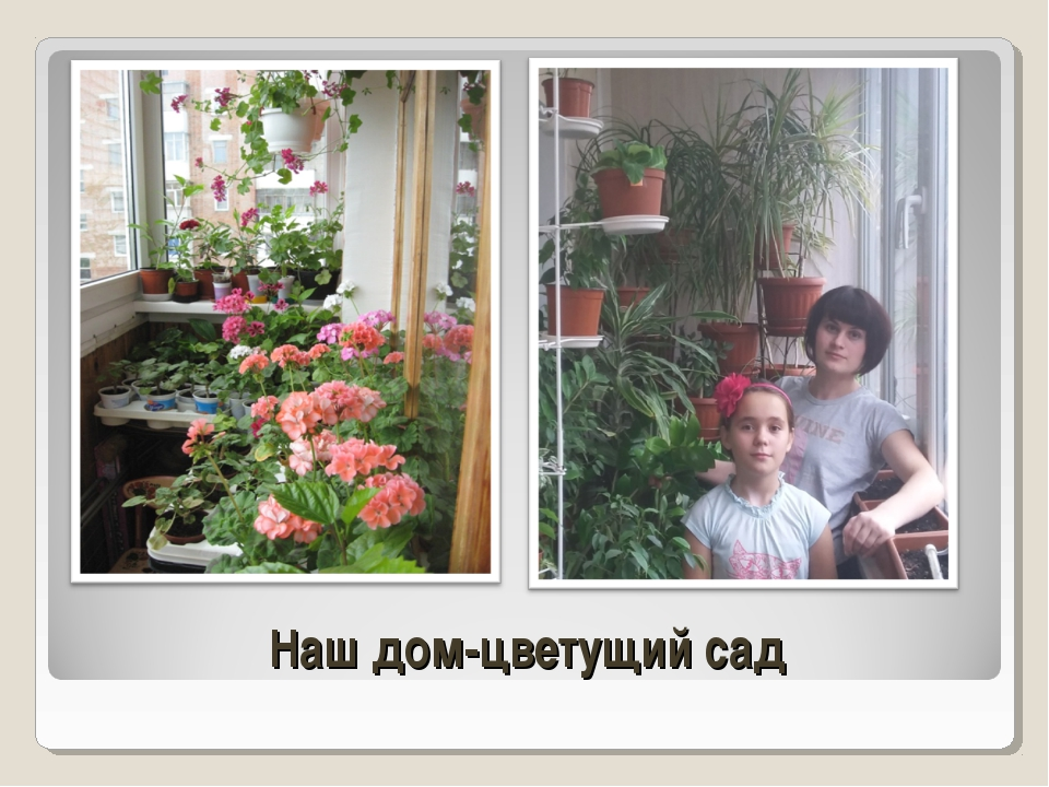 Наш дом-цветущий сад