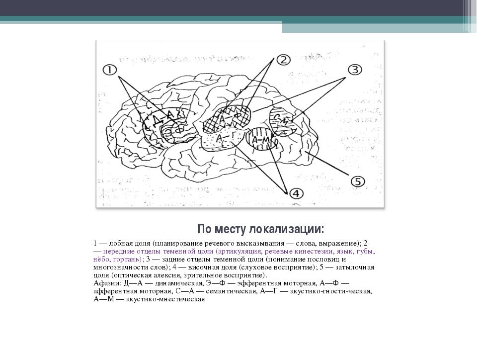 1 — лобная доля (планирование речевого высказывания — слова, выражение); 2 —...