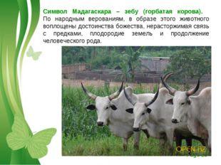 Символ Мадагаскара – зебу (горбатая корова).  По народным верованиям, в обра