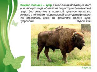 Символ Польши – зубр. Наибольшая популяция этого исчезающего вида обитает на