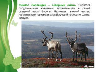 Символ Лапландии – северный олень. Является полудомашним животным, проживающе