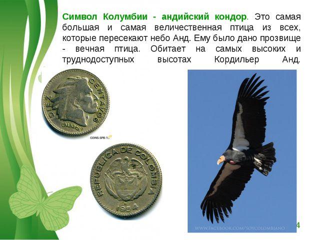 Символ Колумбии - андийский кондор. Это самая большая и самая величественная...