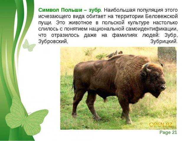 Символ Польши – зубр. Наибольшая популяция этого исчезающего вида обитает на...