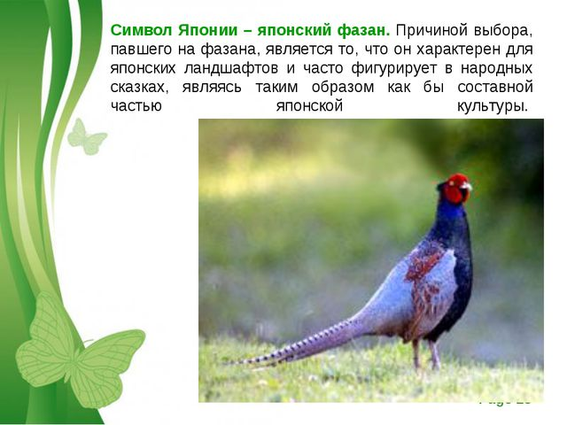 Символ Японии – японский фазан. Причиной выбора, павшего на фазана, является...