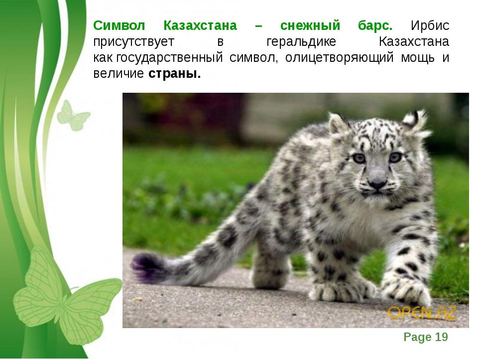 Символ Казахстана – снежный барс. Ирбис присутствует в геральдике Казахстана...