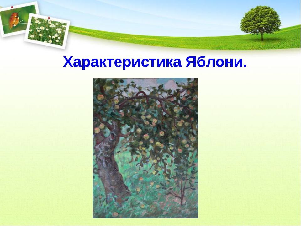 Характеристика Яблони.