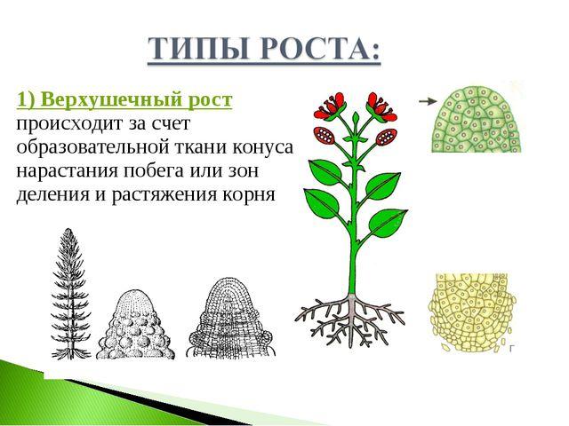 Реферат по биологии 6 класс растения скачать белый реферат скачать бесплатно