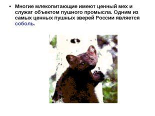 Многие млекопитающие имеют ценный мех и служат объектом пушного промысла. Одн
