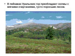 В пейзажах Уральских гор преобладают холмы с мягкими очертаниями, густо порос