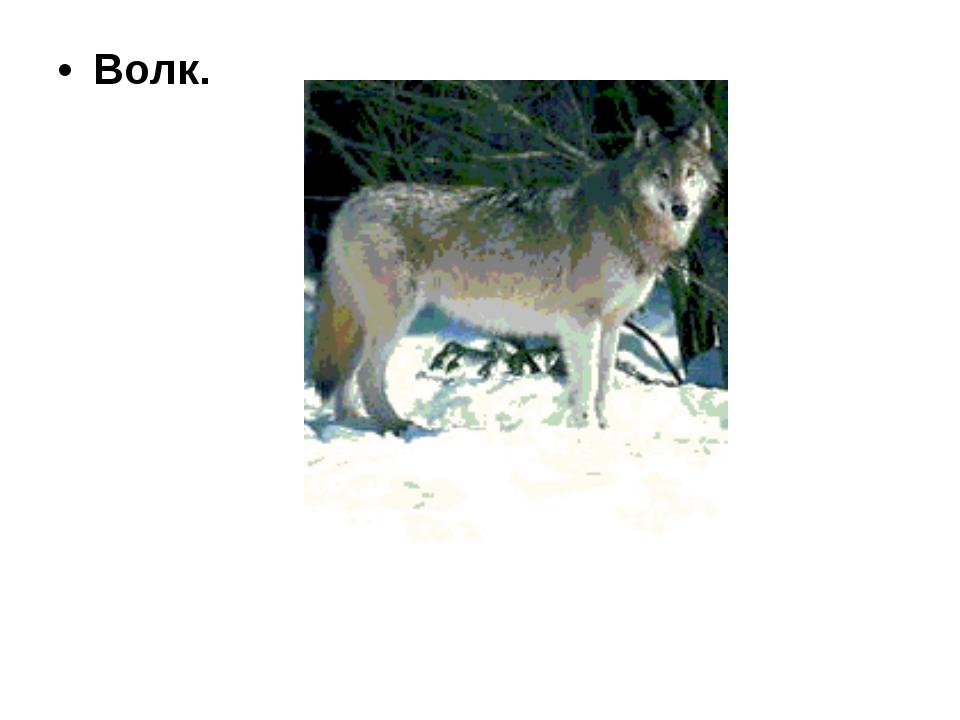 Волк.