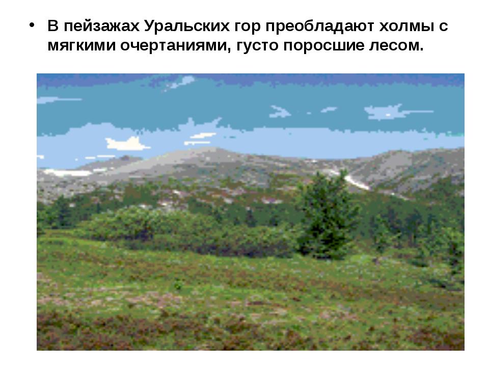 В пейзажах Уральских гор преобладают холмы с мягкими очертаниями, густо порос...
