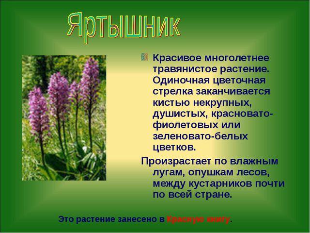 Красивое многолетнее травянистое растение. Одиночная цветочная стрелка заканч...