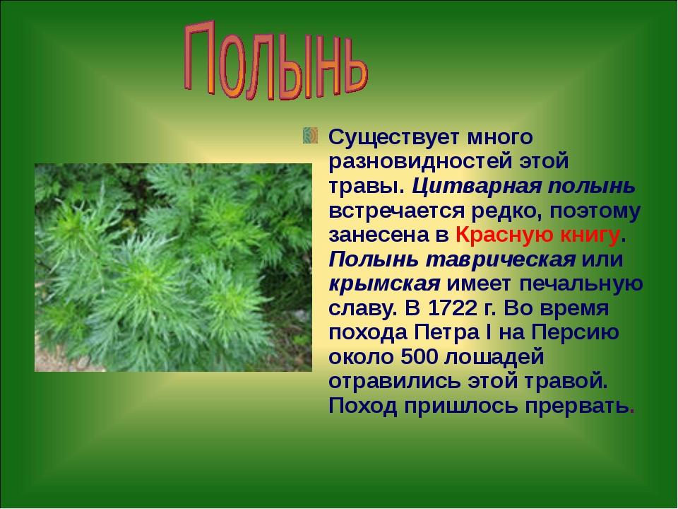 Существует много разновидностей этой травы. Цитварная полынь встречается редк...