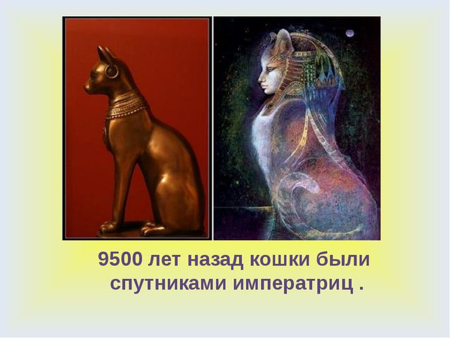 9500 лет назад кошки были спутниками императриц .