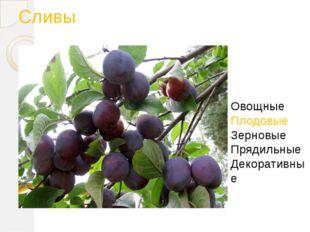 Сливы Овощные Плодовые Зерновые Прядильные Декоративные