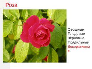 Роза Овощные Плодовые Зерновые Прядильные Декоративные