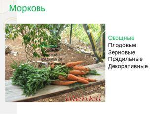 Морковь Овощные Плодовые Зерновые Прядильные декоративные Овощные Плодовые Зе