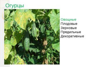 Огурцы Овощные Плодовые Зерновые Прядильные Декоративные