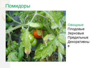 Помидоры Овощные Плодовые Зерновые Прядильные Декоративные