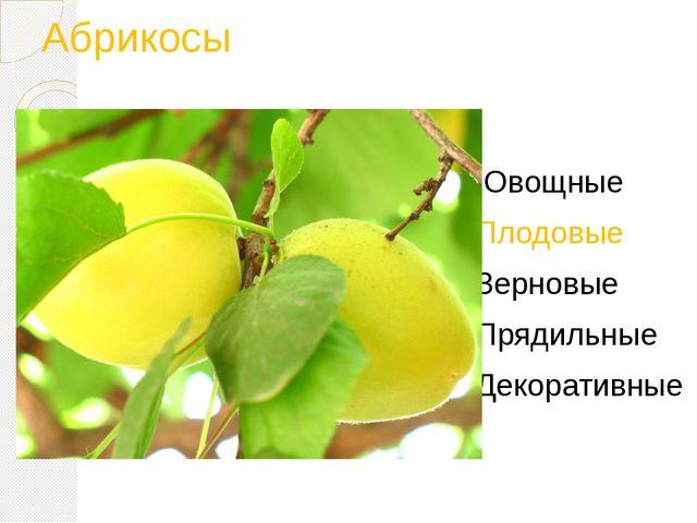 Абрикосы Овощные Плодовые Зерновые Прядильные Декоративные
