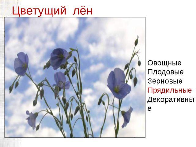 Цветущий лён Цветущий Овощные Плодовые Зерновые Прядильные Декоративные