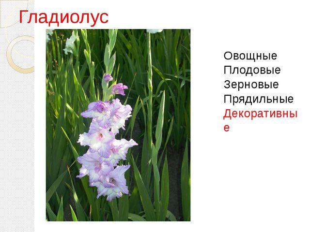 Гладиолус Овощные Плодовые Зерновые Прядильные Декоративные