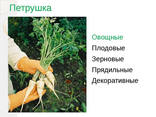 Петрушка Овощные Плодовые Зерновые Прядильные Декоративные