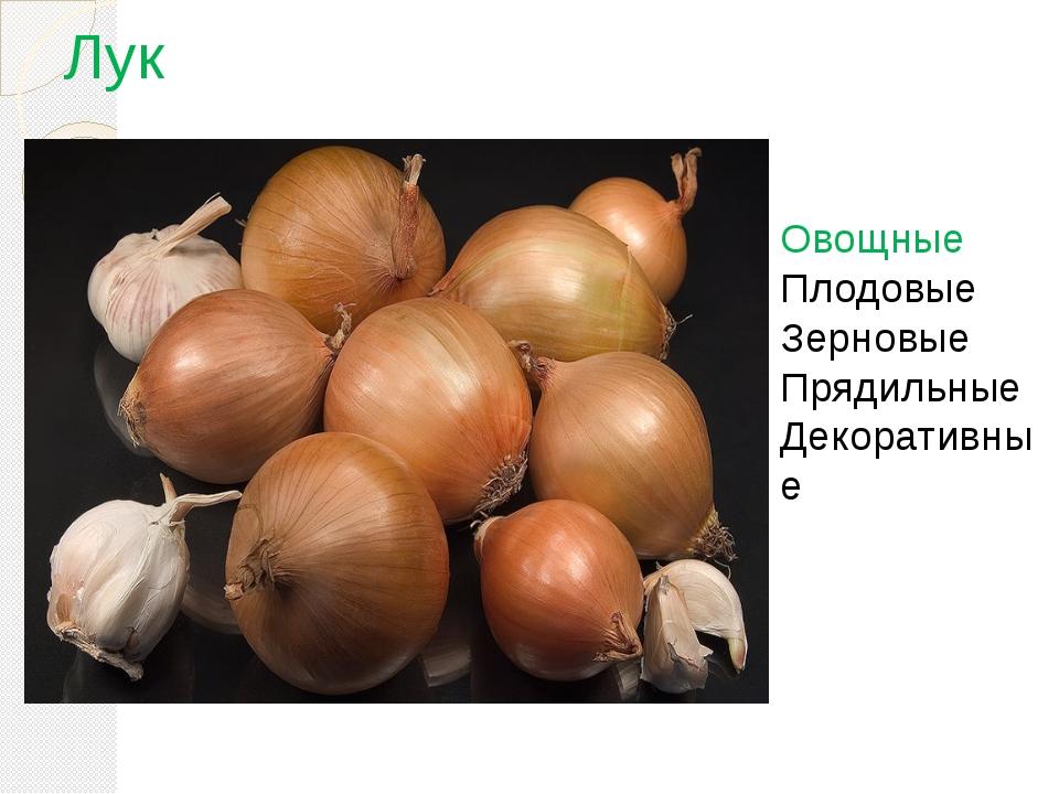 Лук Овощные Плодовые Зерновые Прядильные Декоративные