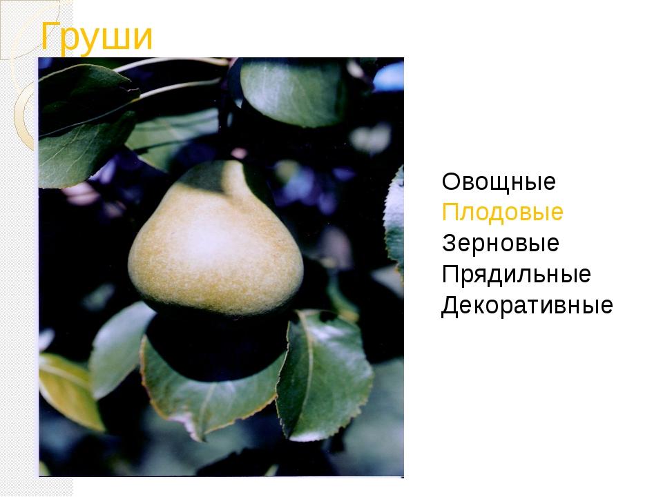 Груши Овощные Плодовые Зерновые Прядильные Декоративные